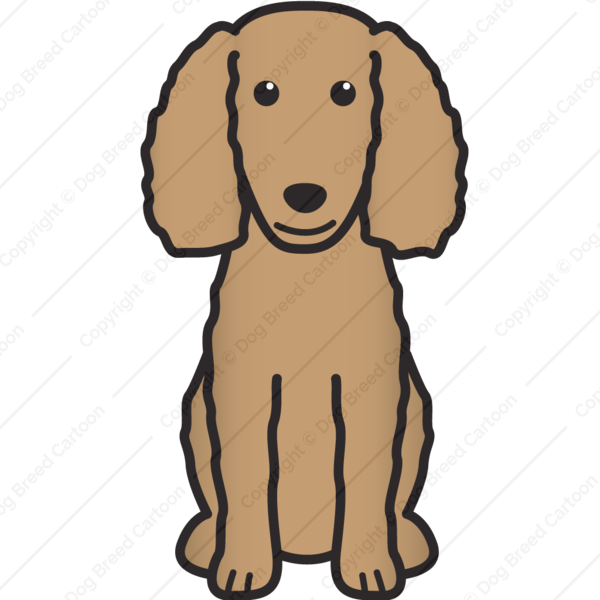 American Water Spaniel Cartoon