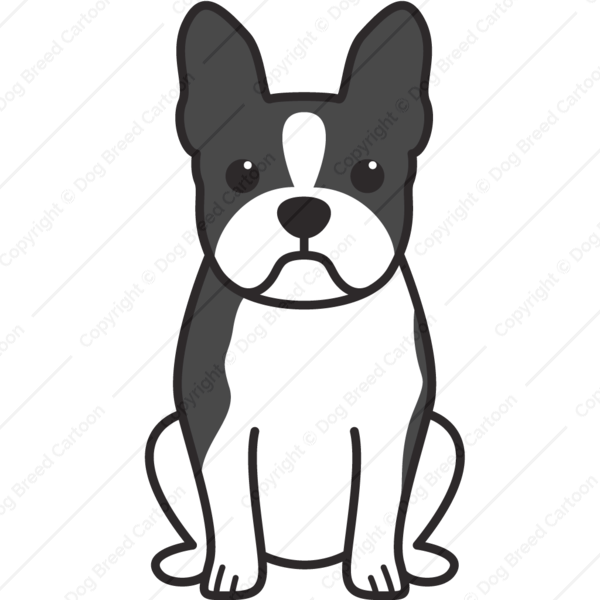 Boston Terrier Cartoon