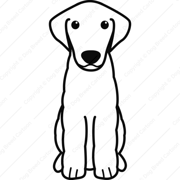 Kuvasz Cartoon