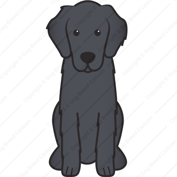 Flat Coated Retriever Cartoon