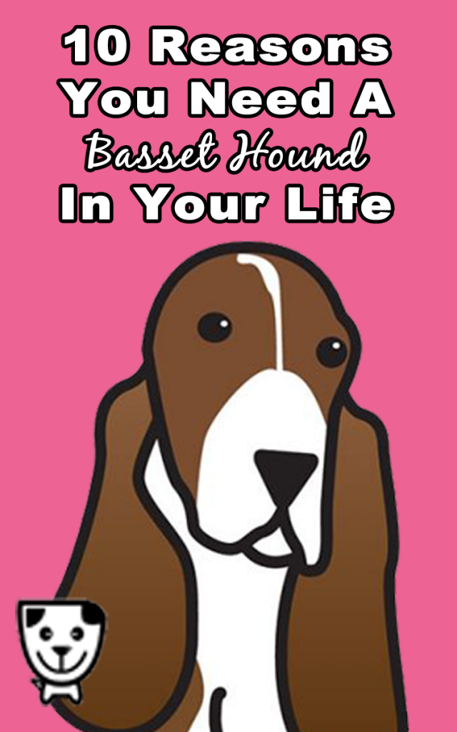 10 Reasons You Need A #Bassethound in Your LIfe: