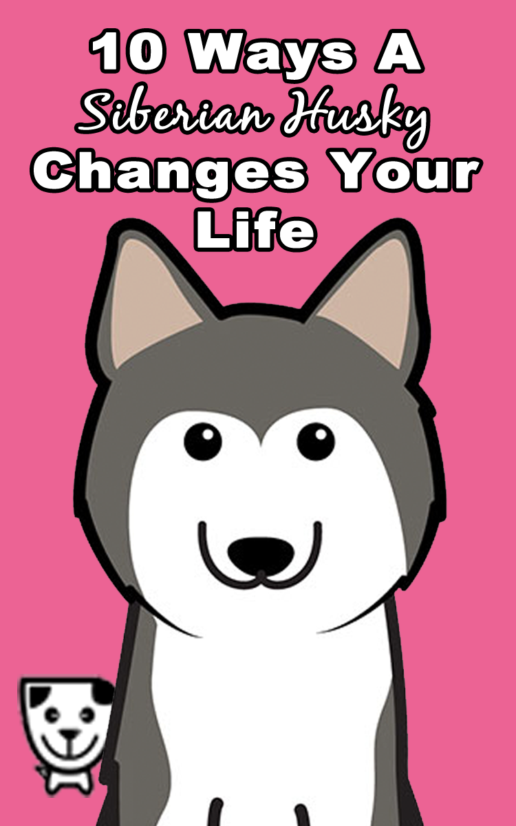 10 Ways A #SiberianHusky Changes Your Life