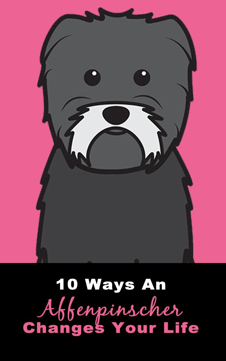 10 Ways An #Affenpinscher Changes Your Life