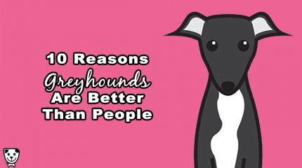 Face it, your #greyhound is better than every human you know.