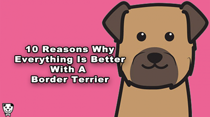 10 Reasons Why Everything Is Better With A #BorderTerrier