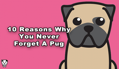 10 Reasons Why You Never Forget A #Pug
