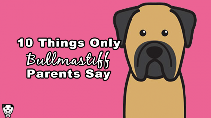 10 Things Only #Bullmastiff Parents Say