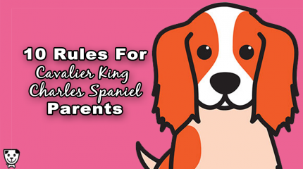 10 Rules For #Cavalier King Charles Spaniel Parents