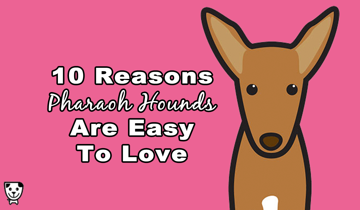 Why The #PharaohHound Is So Easy To Love