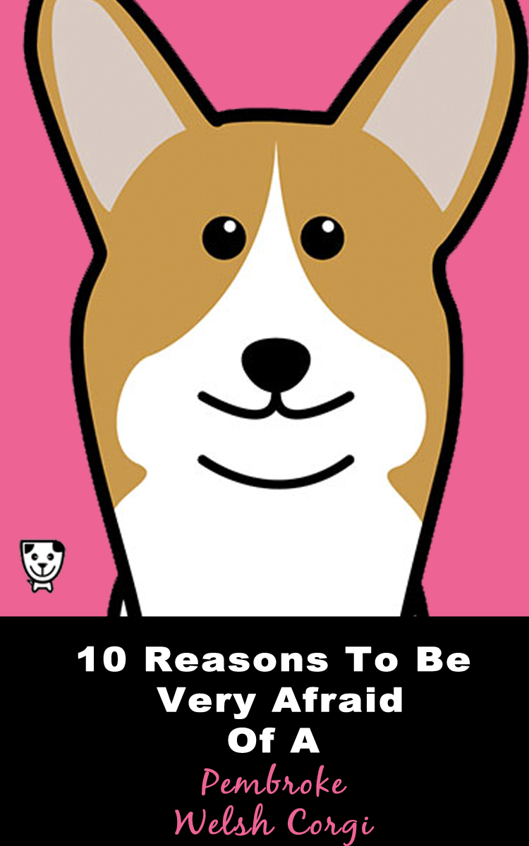 10 Reasons To Be Very Afraid Of A #PembrokeWelshCorgi