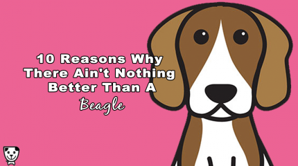 10 Reasons Why There Ain't Nothing Better Than A #Beagle