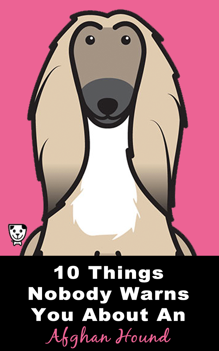 10 Things Nobody Warns You About An #AfghanHound