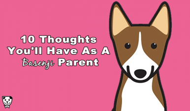 10 Thoughts You'll Have As A #Basenji Parent