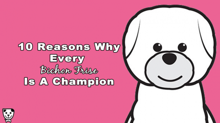 10 Reasons Why Every #BichonFrise is A Champion