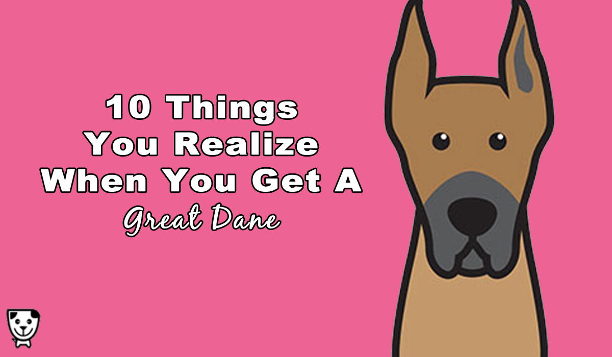 10 Things You Realize When You Get A Great Dane