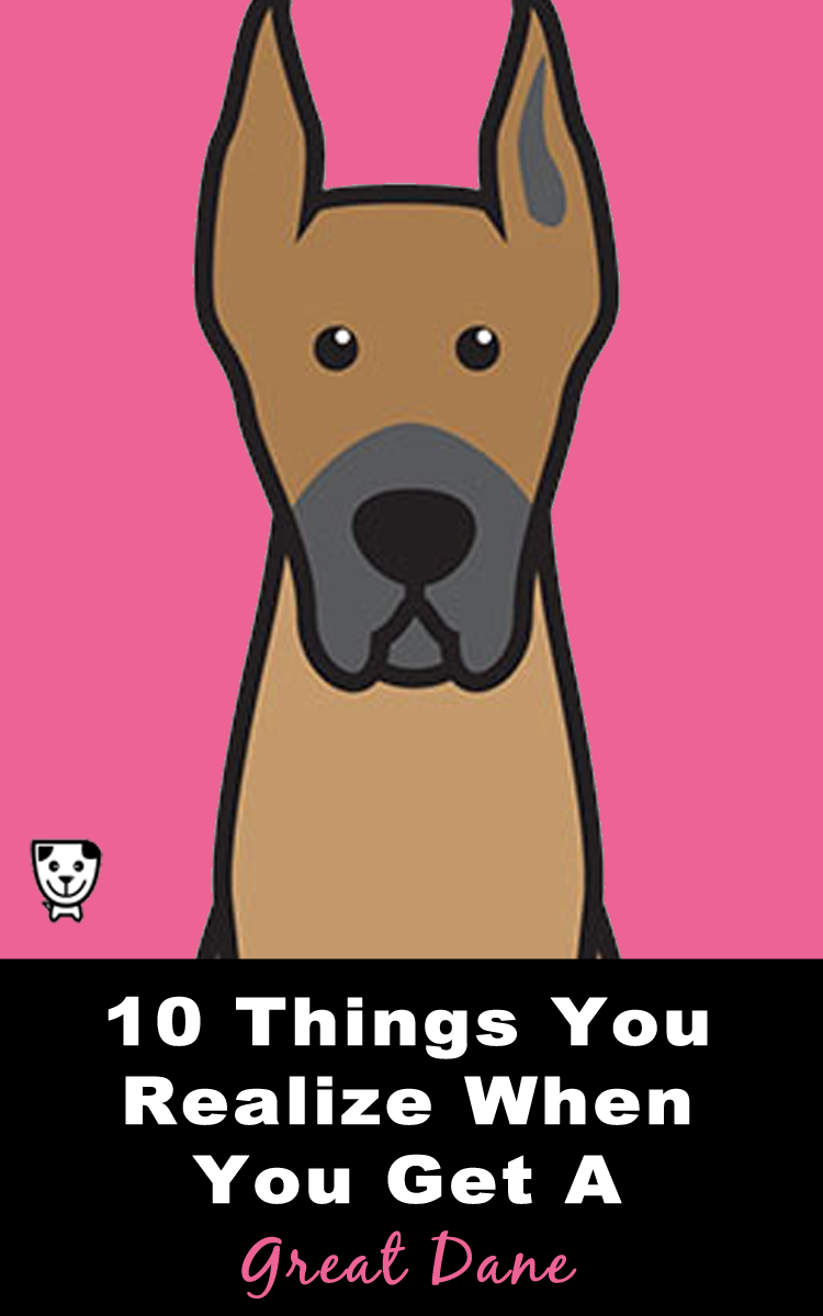 10 Things You Realize When You Get A #GreatDane
