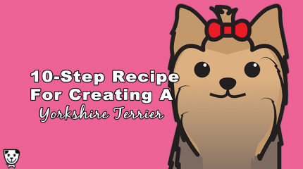 10 Steps To Creating A #YorkshireTerrier #Yorkie